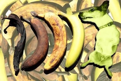 small 5 - banananugglet